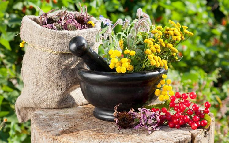 Какие травы и настои помогут устранить проблемы с пищеварением 1