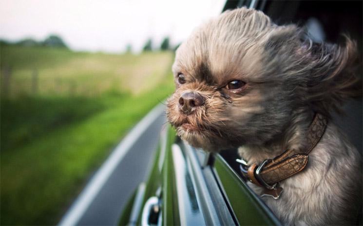 Как правильно и лучше возить собаку в автомобиле 1
