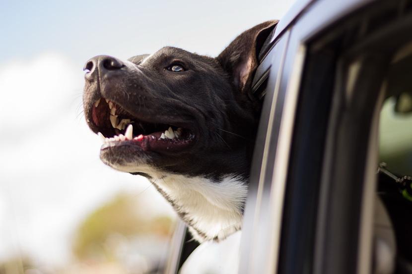 Как правильно и лучше возить собаку в автомобиле 3