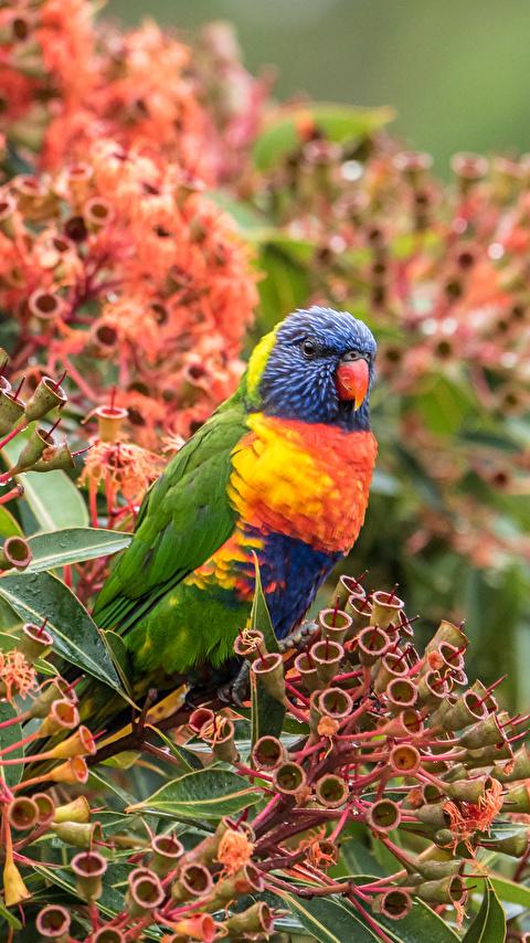 Красивые и классные картинки птиц на телефон на заставку - сборка 14