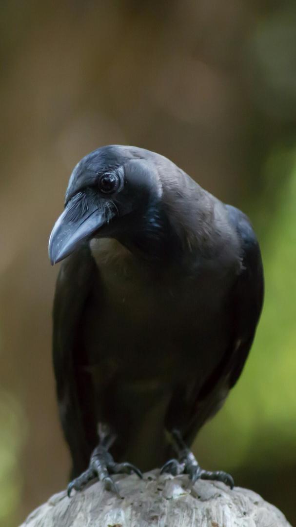 Красивые и классные картинки птиц на телефон на заставку - сборка 15