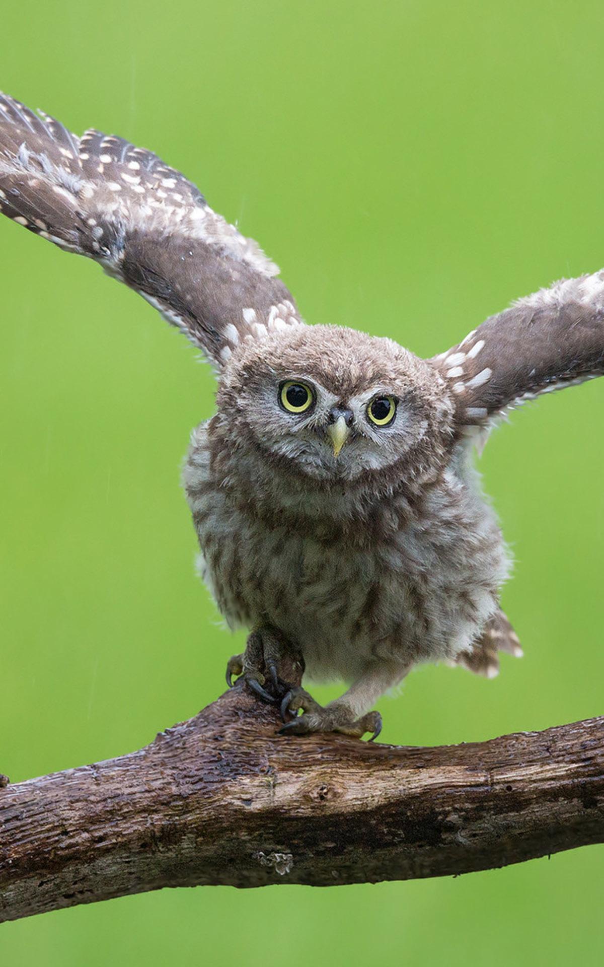 Красивые и классные картинки птиц на телефон на заставку - сборка 16