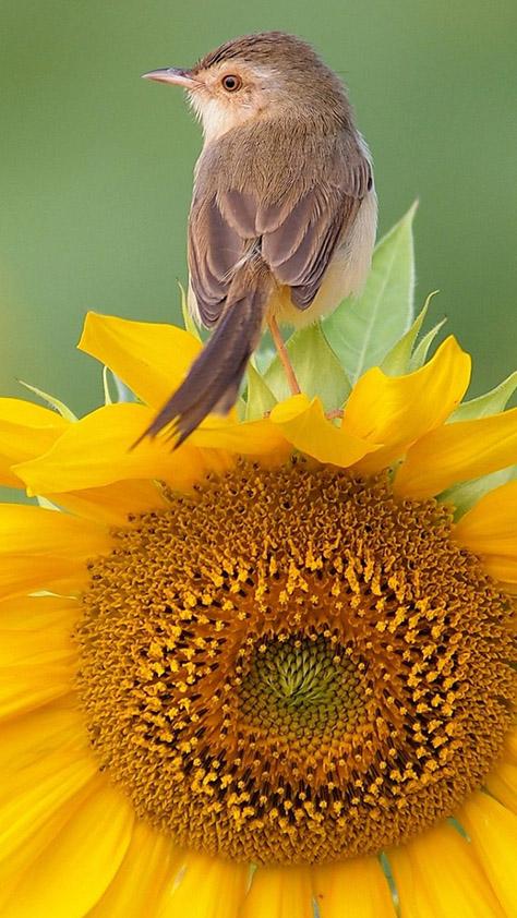 Красивые и классные картинки птиц на телефон на заставку - сборка 3