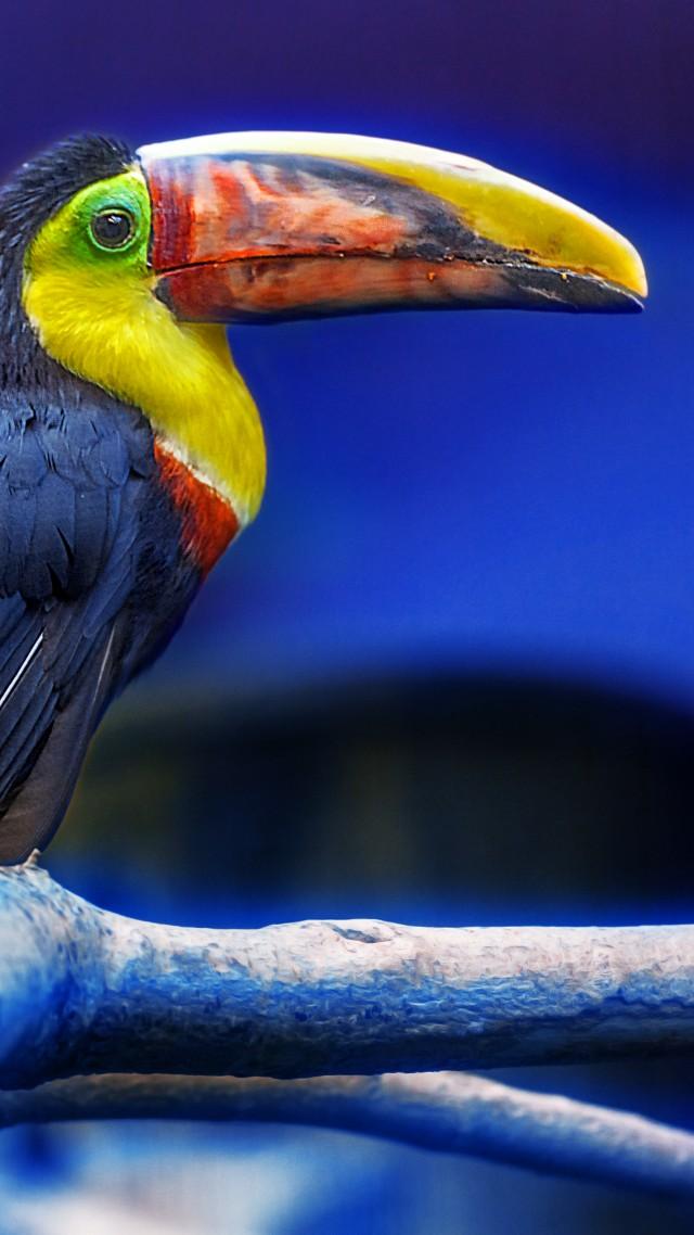 Красивые и классные картинки птиц на телефон на заставку - сборка 4