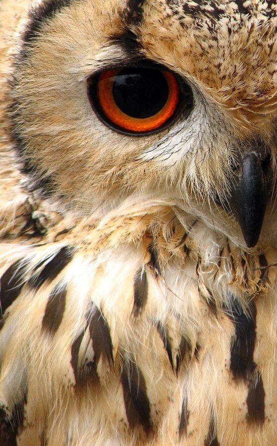 Красивые и классные картинки птиц на телефон на заставку - сборка 5