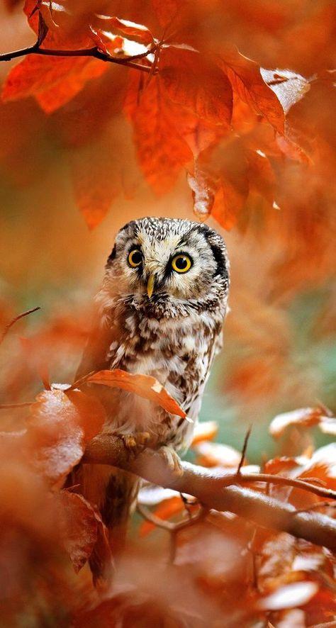 Красивые и классные картинки птиц на телефон на заставку - сборка 6