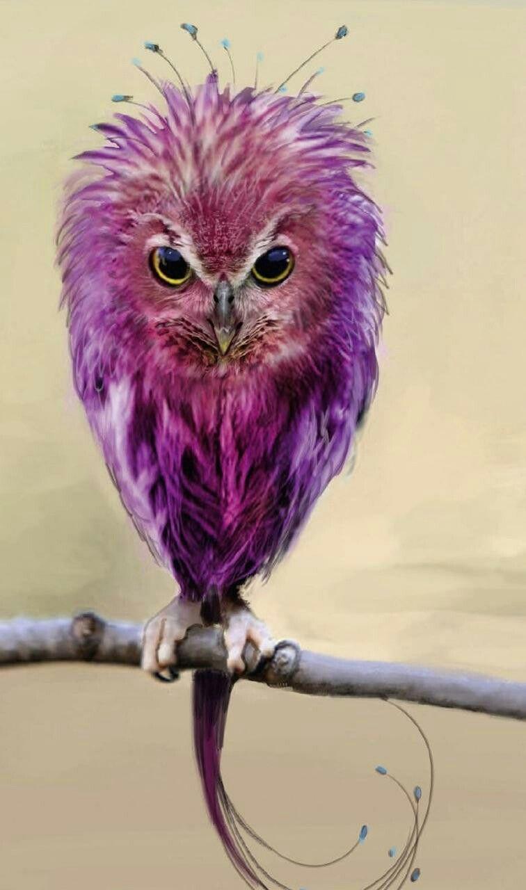 Красивые и классные картинки птиц на телефон на заставку - сборка 8