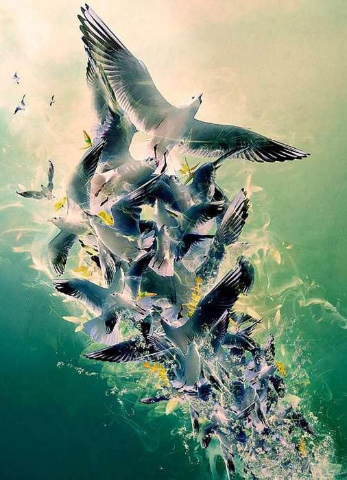 Красивые и классные картинки птиц на телефон на заставку - сборка 9