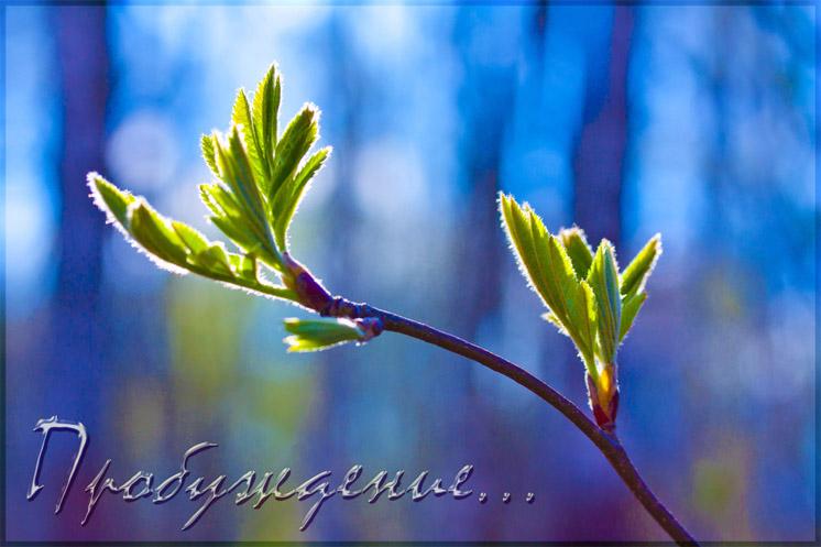 Красивые картинки С добрым утром, весна - приятные открытки 3