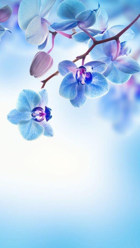 Красивые картинки на телефон цветы на главный экран - подборка 1