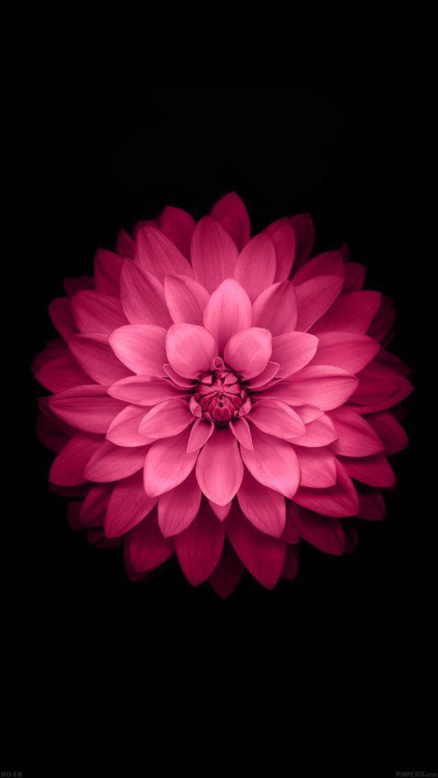 Красивые картинки на телефон цветы на главный экран - подборка 14