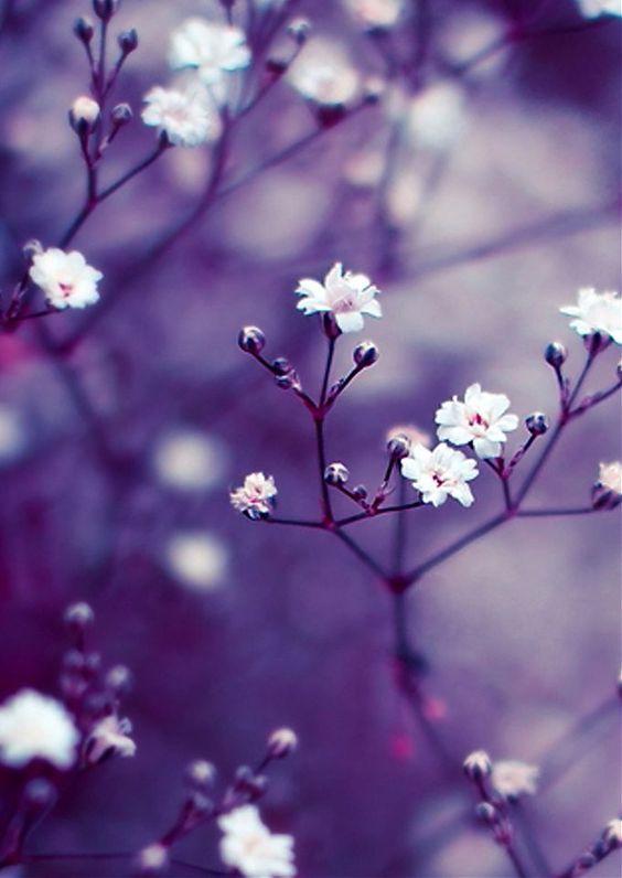 Красивые картинки на телефон цветы на главный экран - подборка 4