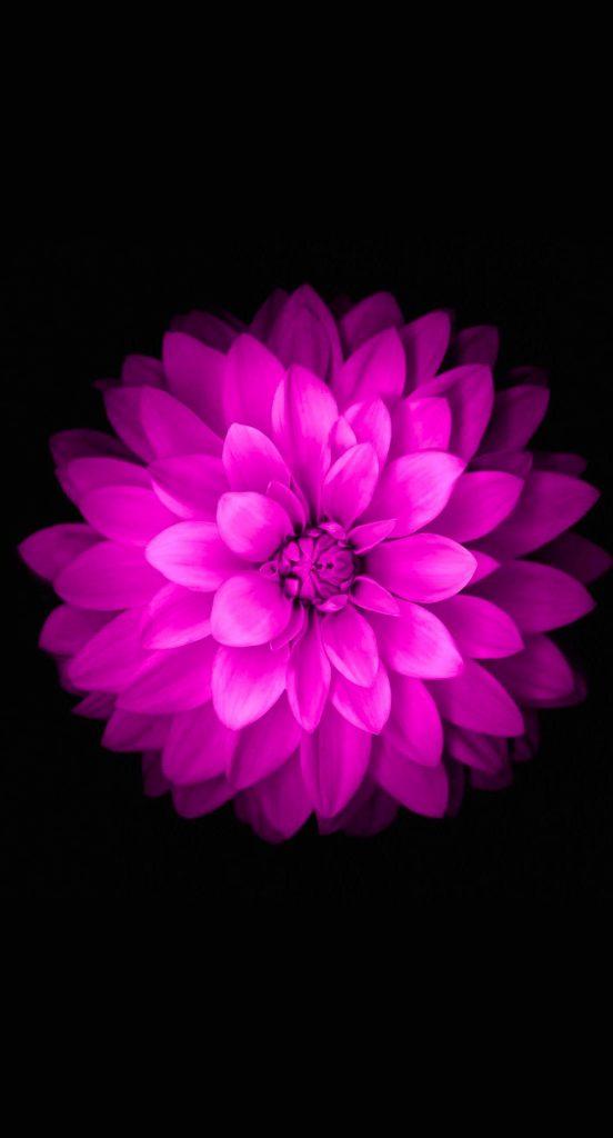 Красивые картинки на телефон цветы на главный экран - подборка 5