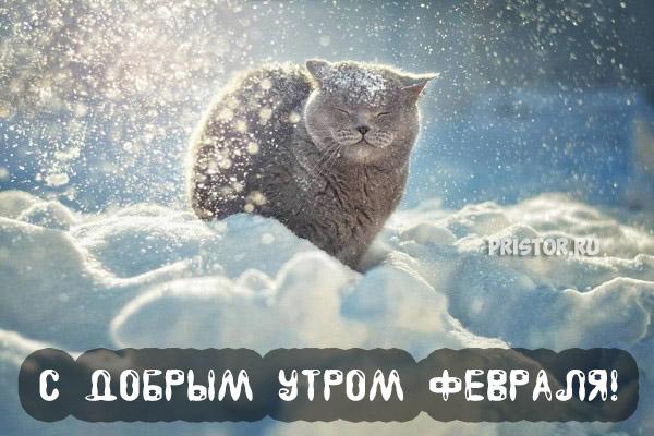 Красивые картинки, открытки С добрым утром, февраль - сборка 4
