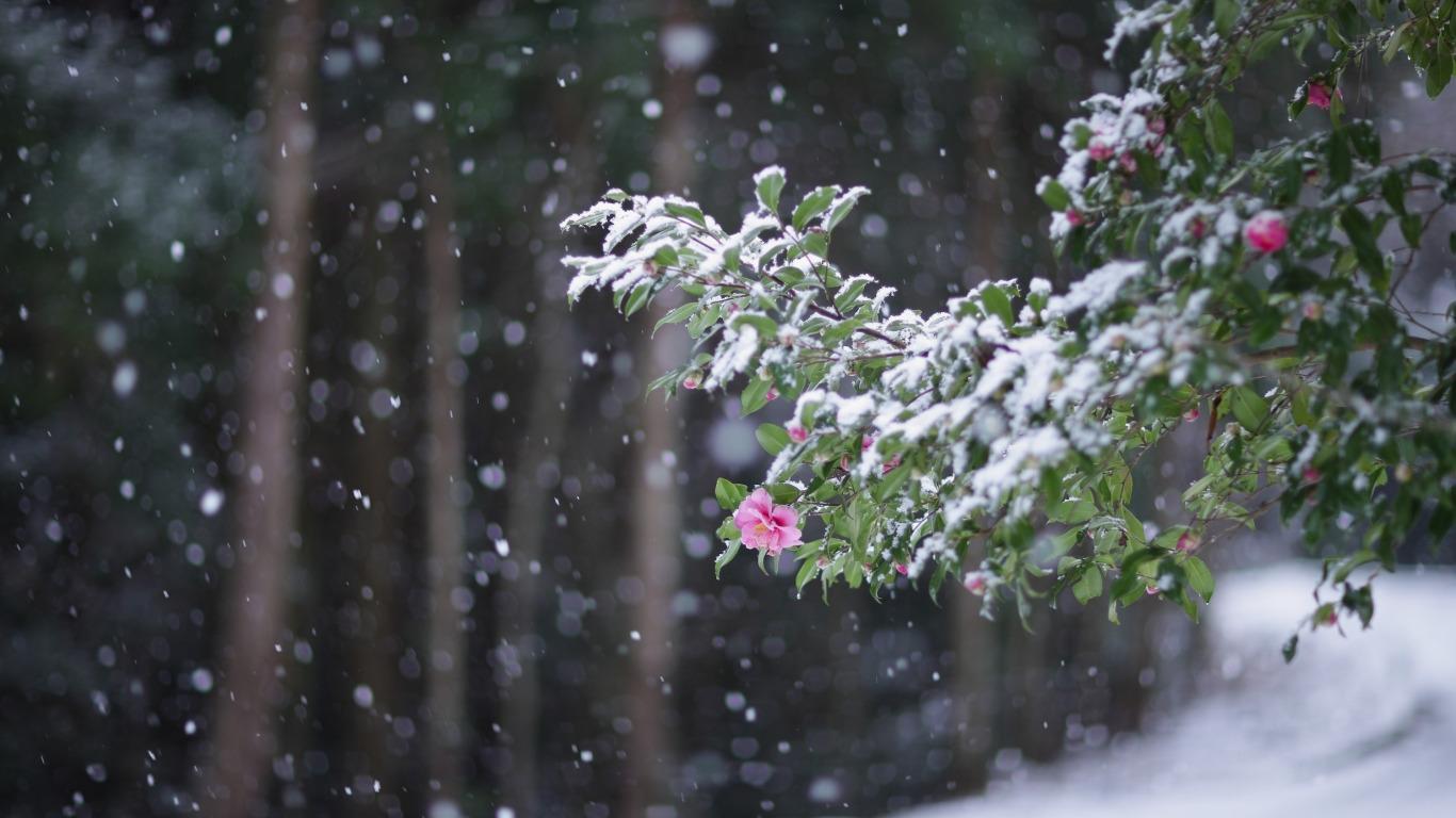 Падающий снег - красивые картинки и обои на рабочий стол 10