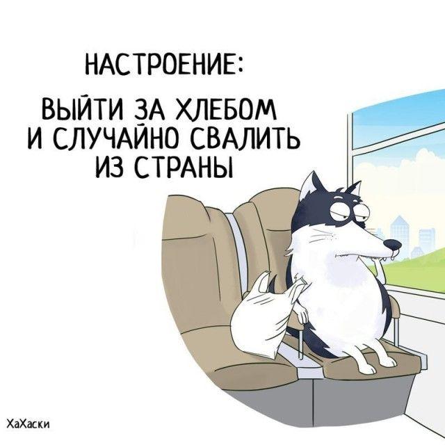 Прикольные и смешные комиксы из жизни Хаски Карла - подборка 32 картинки 23