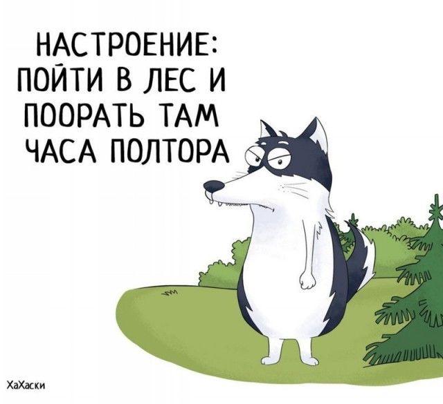 Прикольные и смешные комиксы из жизни Хаски Карла - подборка 32 картинки 9