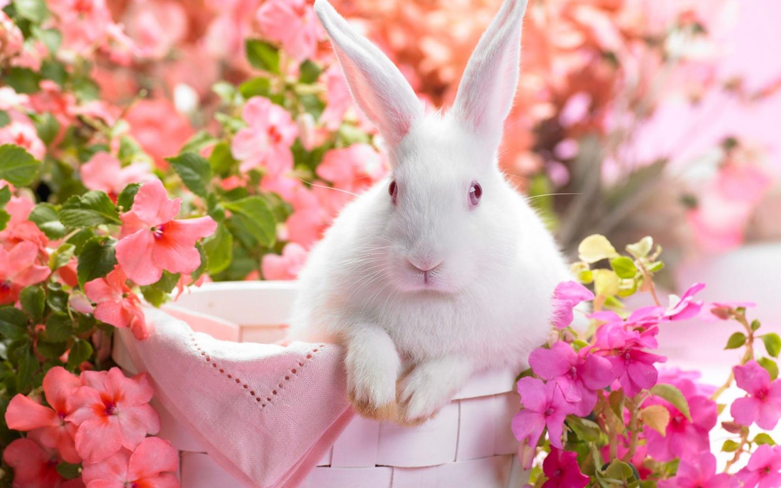 Удивительная и красивая подборка картинок Весна - 25 фото 10