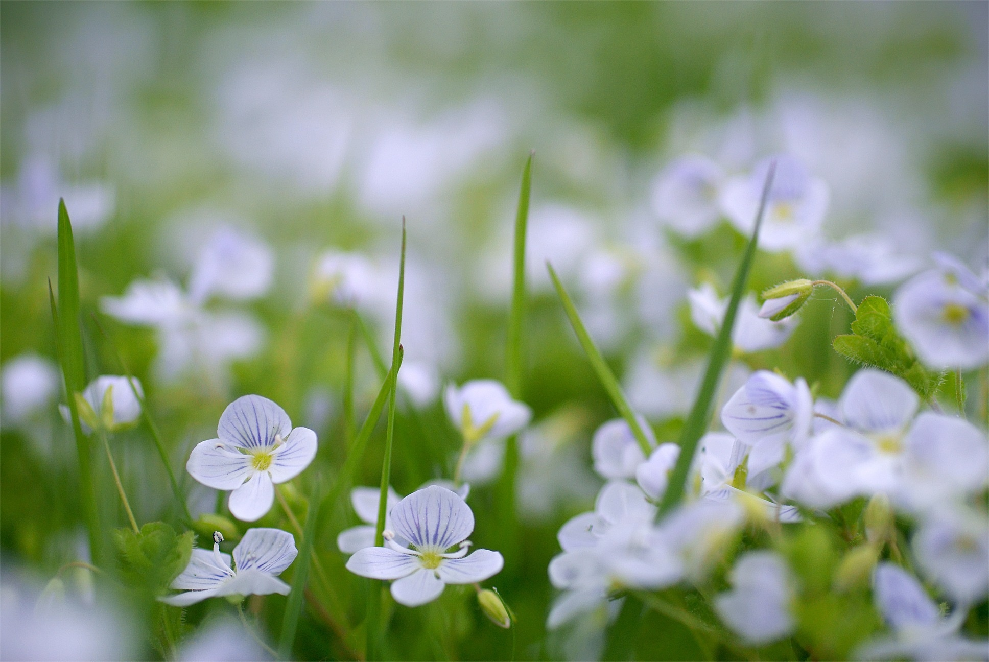 Удивительная и красивая подборка картинок Весна - 25 фото 23