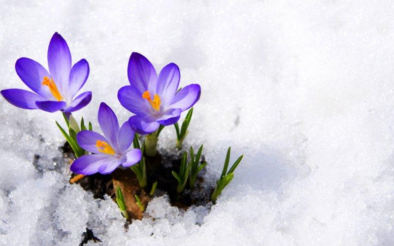 Удивительная и красивая подборка картинок Весна - 25 фото 5