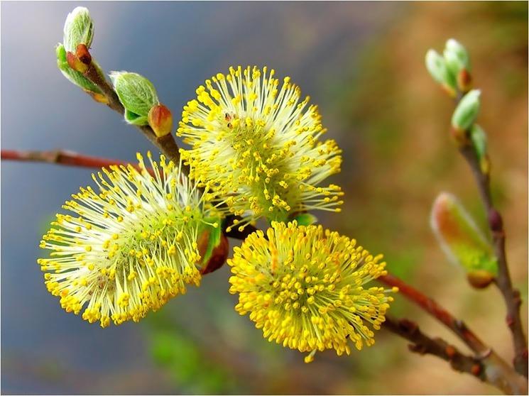 Удивительная и красивая подборка картинок Весна - 25 фото 7