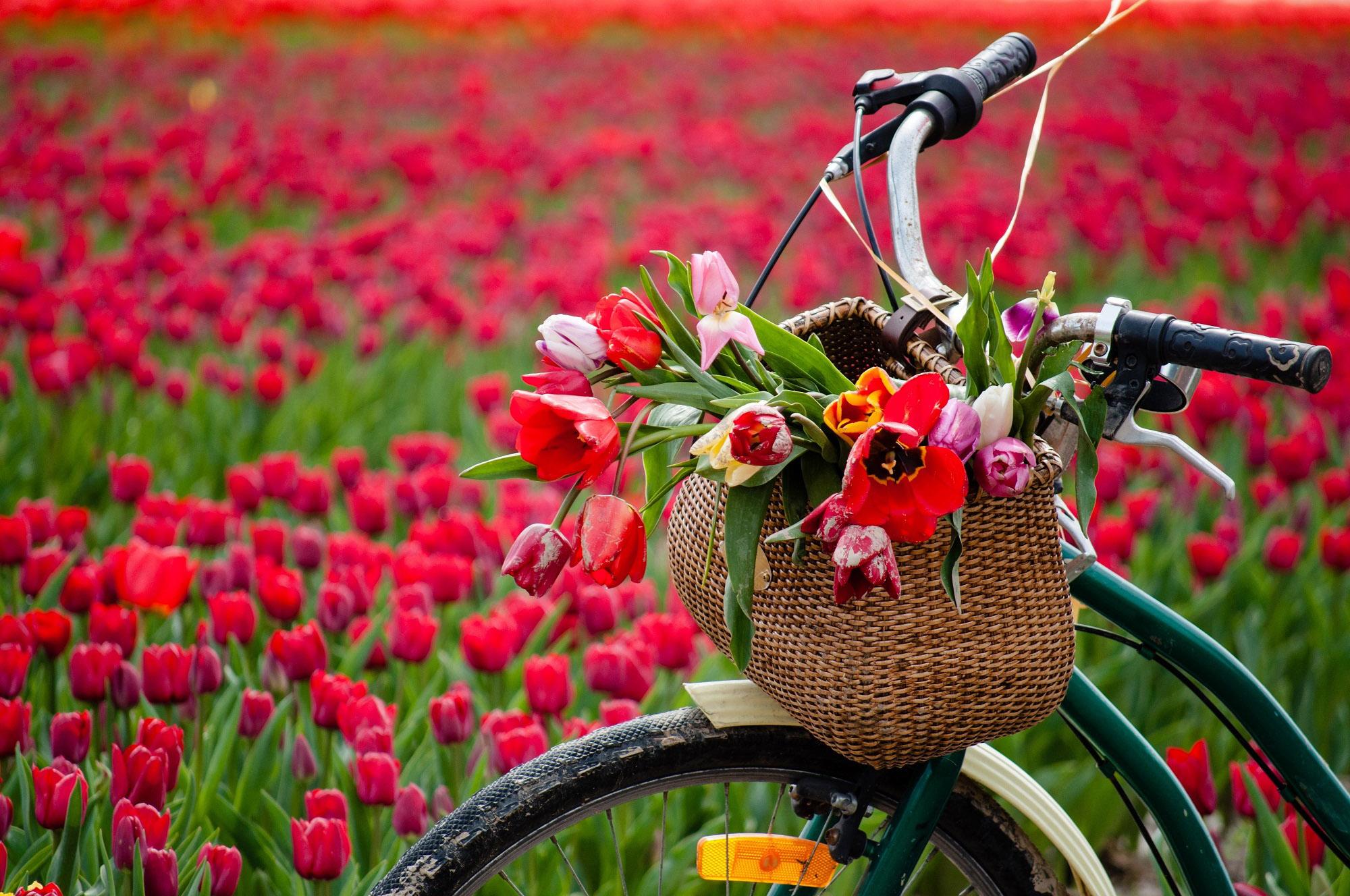 Удивительная и красивая подборка картинок Весна - 25 фото 8