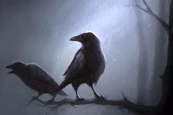 Классные и крутые картинки воронов, фото воронов - подборка 20