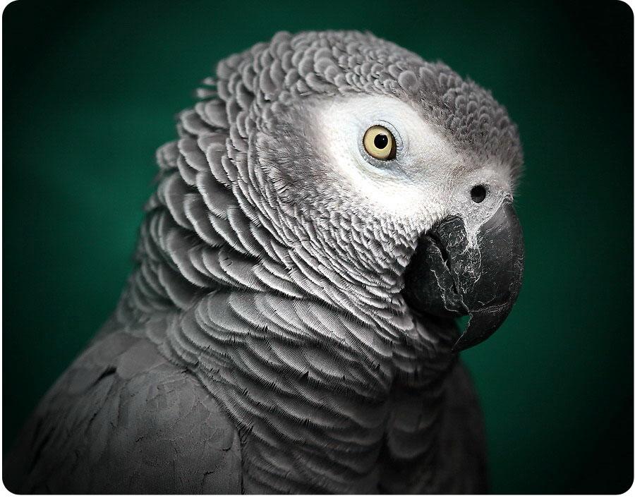 Красивые и прикольные фото, картинки попугая Жако - подборка 17