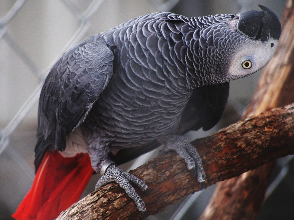 Красивые и прикольные фото, картинки попугая Жако - подборка 4