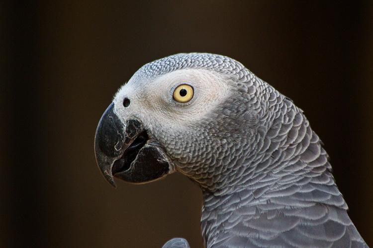 Красивые и прикольные фото, картинки попугая Жако - подборка 7