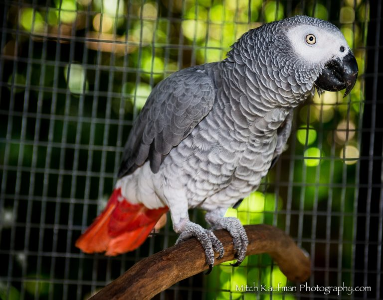 Красивые и прикольные фото, картинки попугая Жако - подборка 9