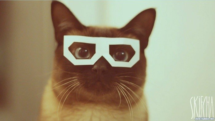 Красивые картинки котики и кошки на аву, аватарку - подборка 14