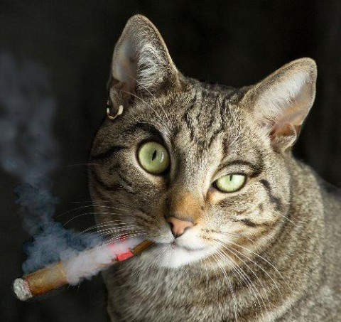 Красивые картинки котики и кошки на аву, аватарку - подборка 15