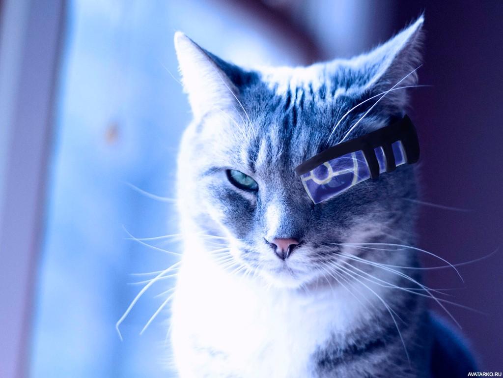 Красивые картинки котики и кошки на аву, аватарку - подборка 3