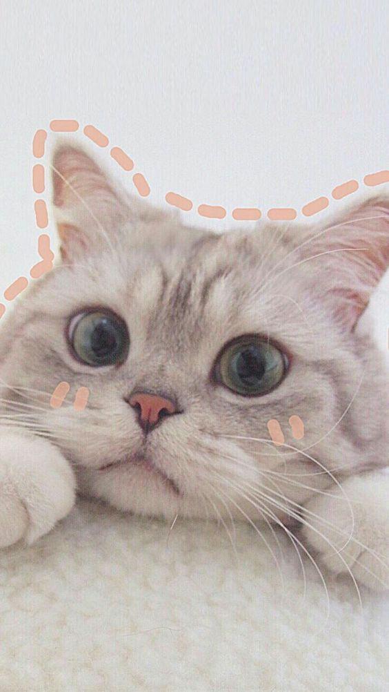 Красивые картинки котики и кошки на аву, аватарку - подборка 5