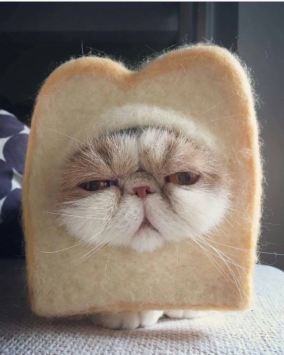 Красивые картинки котики и кошки на аву, аватарку - подборка 7
