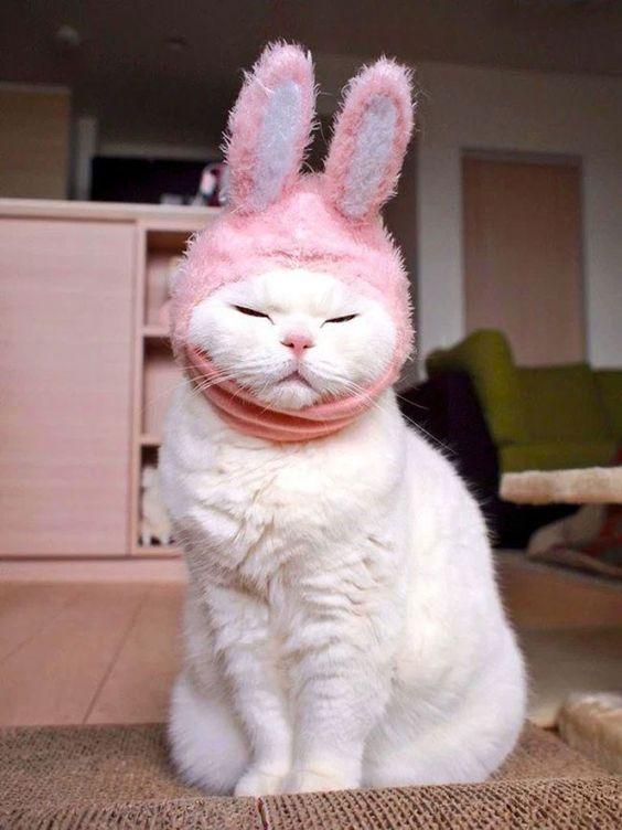 Красивые картинки котики и кошки на аву, аватарку - подборка 9