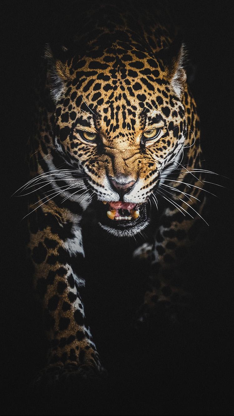 Лучшие картинки и обои на телефон Леопард - подборка 10