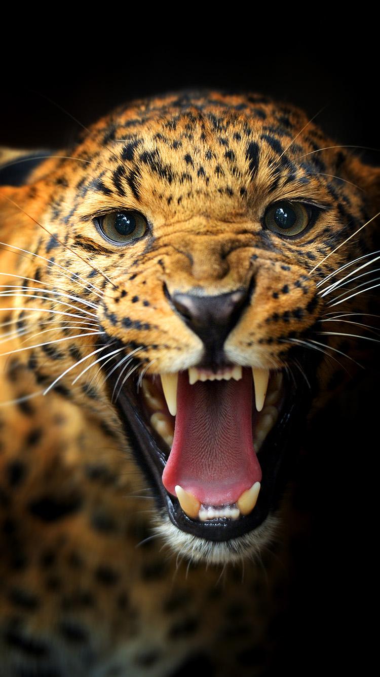 Лучшие картинки и обои на телефон Леопард - подборка 2