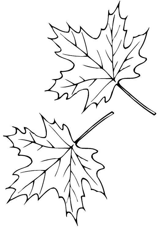 Шаблон кленовый лист, интересные рисунки шаблоны кленовый лист 2