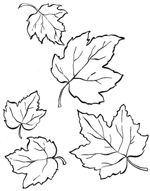 Шаблон кленовый лист, интересные рисунки шаблоны кленовый лист 9