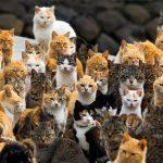 Путешествие на необыкновенный остров кошек