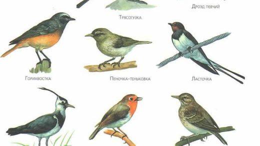 Какие птицы улетают на юг осенью - Pristor