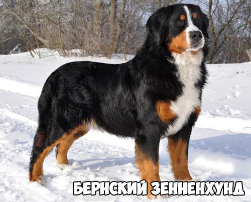 bernskij-zennenxund