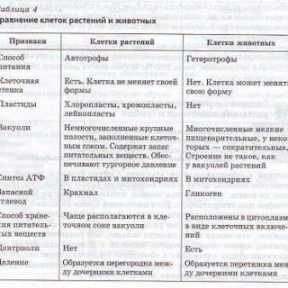 сходства и различия растительной и животной клетки