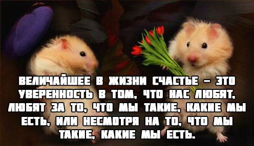 kartinki-pro-lyubov-so-smyslom-dlya-muzhchin-7