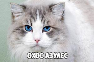 Охос азулес