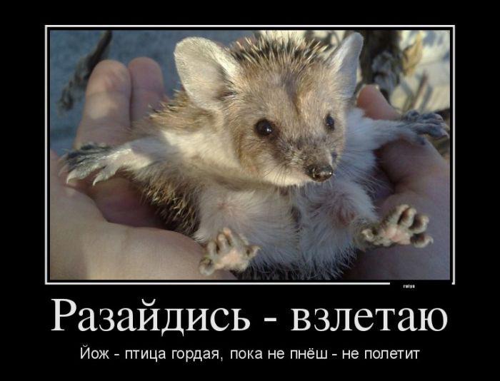 Прикольные картинки с животными 6
