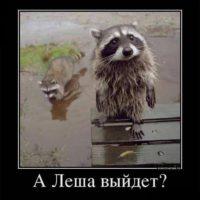 Прикольные картинки с животными 7