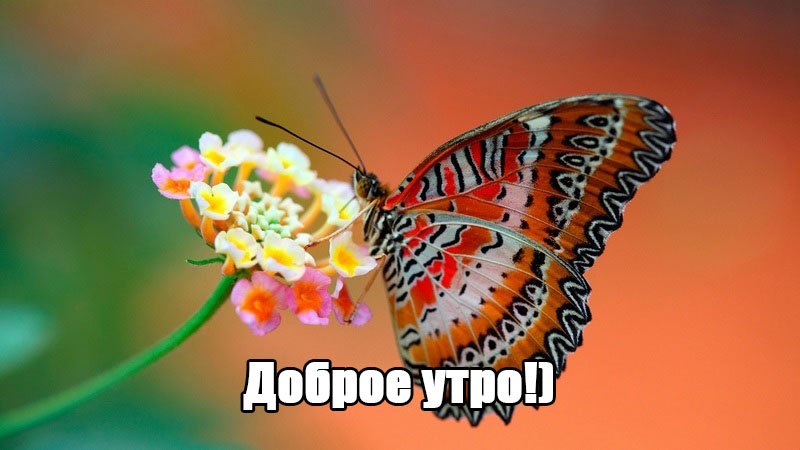 krasivye-foto-babochek2